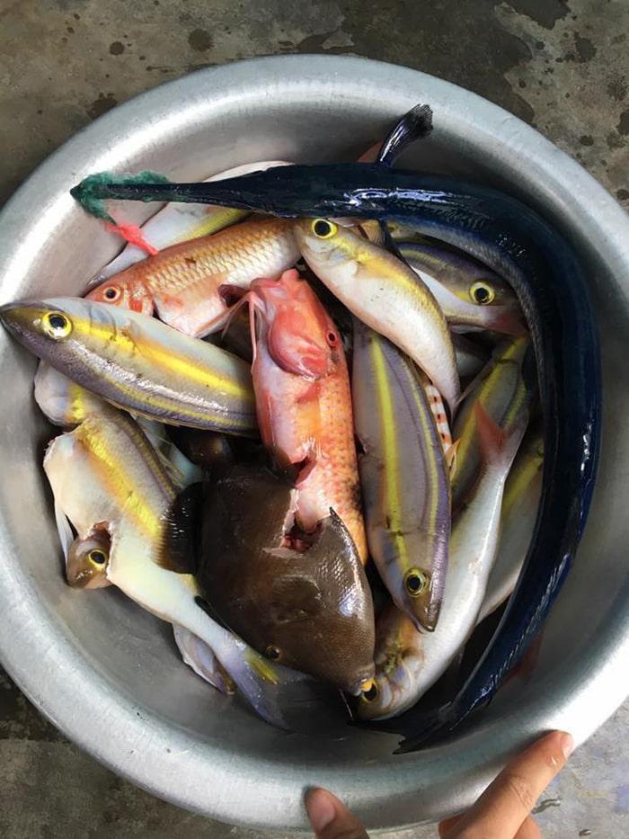 Các loại cá trên đảo Phú Quý