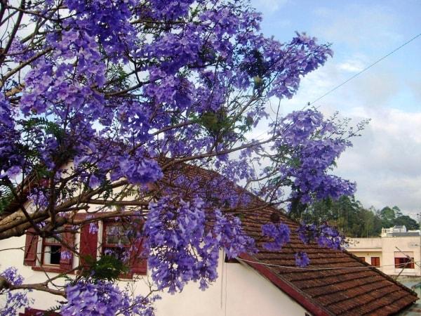 Du lịch Đà Lạt tháng 3 hấp dẫn những mùa hoa 7