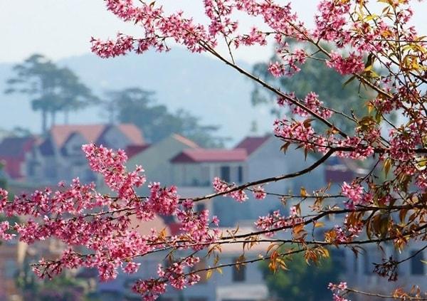 Du lịch Đà Lạt tháng 3 hấp dẫn những mùa hoa 8