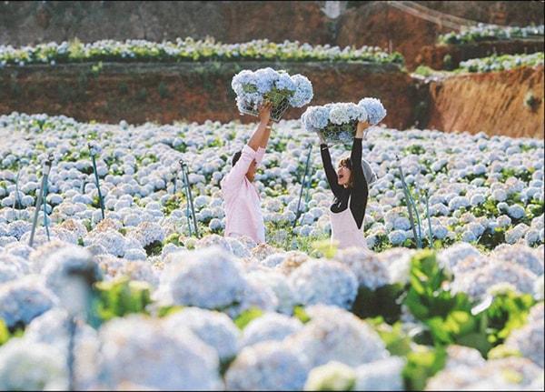 Du lịch Đà Lạt tháng 3 hấp dẫn những mùa hoa 18