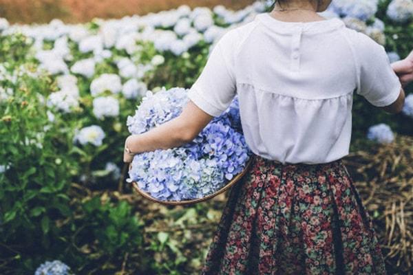 Du lịch Đà Lạt tháng 3 hấp dẫn những mùa hoa 14