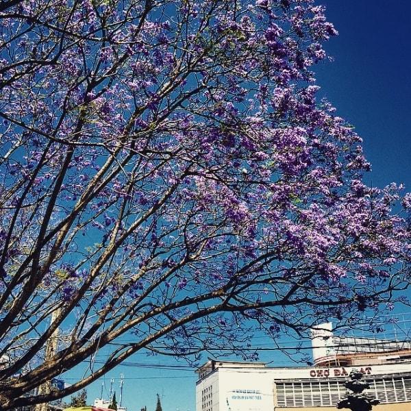 Du lịch Đà Lạt tháng 3 hấp dẫn những mùa hoa 4