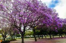 Du lịch Đà Lạt tháng 3 hấp dẫn những mùa hoa 1