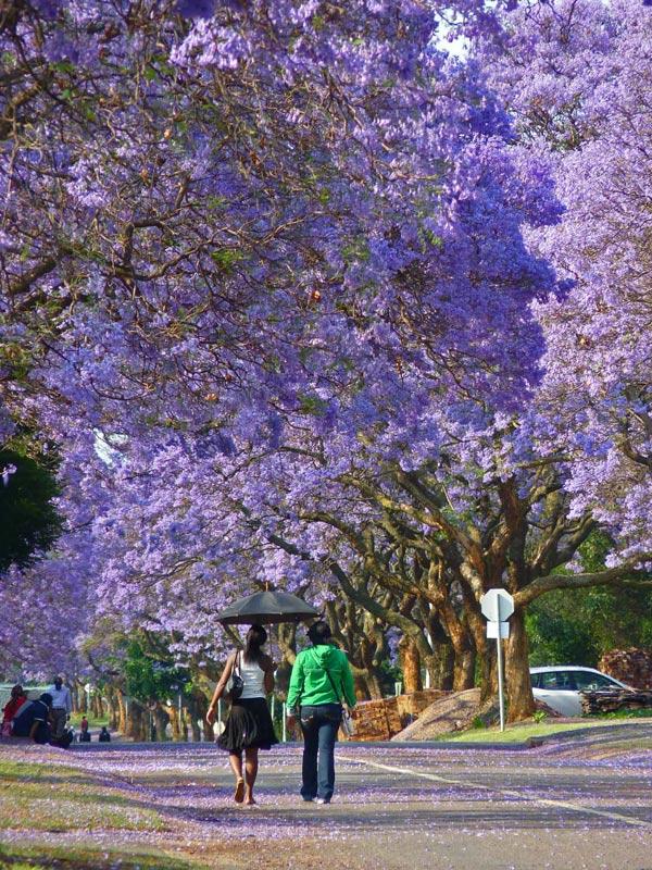 Du lịch Đà Lạt tháng 3 hấp dẫn những mùa hoa 6