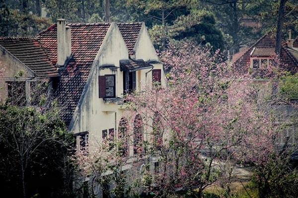 Du lịch Đà Lạt tháng 3 hấp dẫn những mùa hoa 11