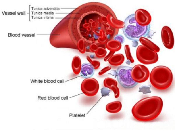 Cách làm giảm bạch cầu trong máu hiệu quả