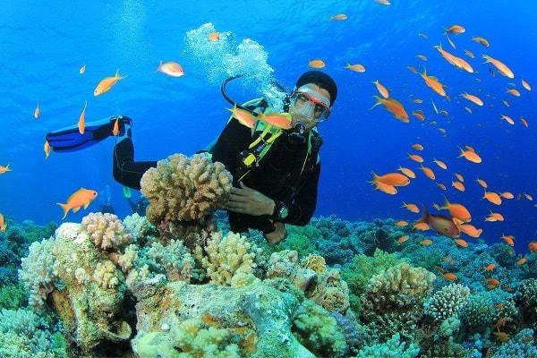 ặn ngắm san hô dưới biển Nha Trang là trải nghiệm thú vị của rất nhiều du khách.