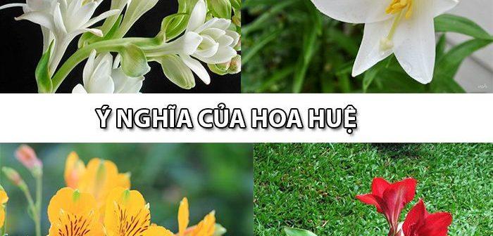 Ý nghĩa của hoa Huệ mà không phải ai cũng biết
