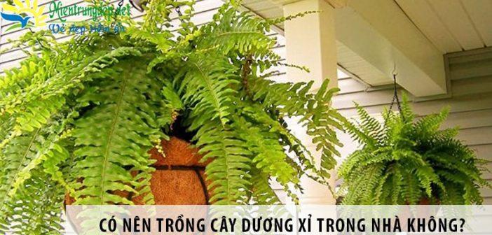 Có nên trồng cây dương xỉ trong nhà không?
